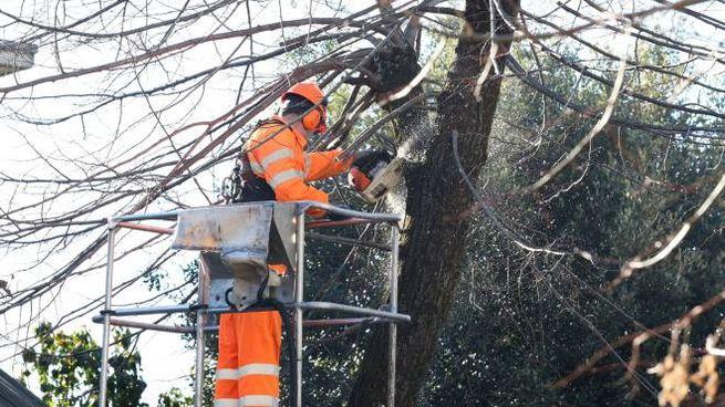 Gli unici lavori consentiti sono quelli che riguardano la manutenzione del verde pubblico