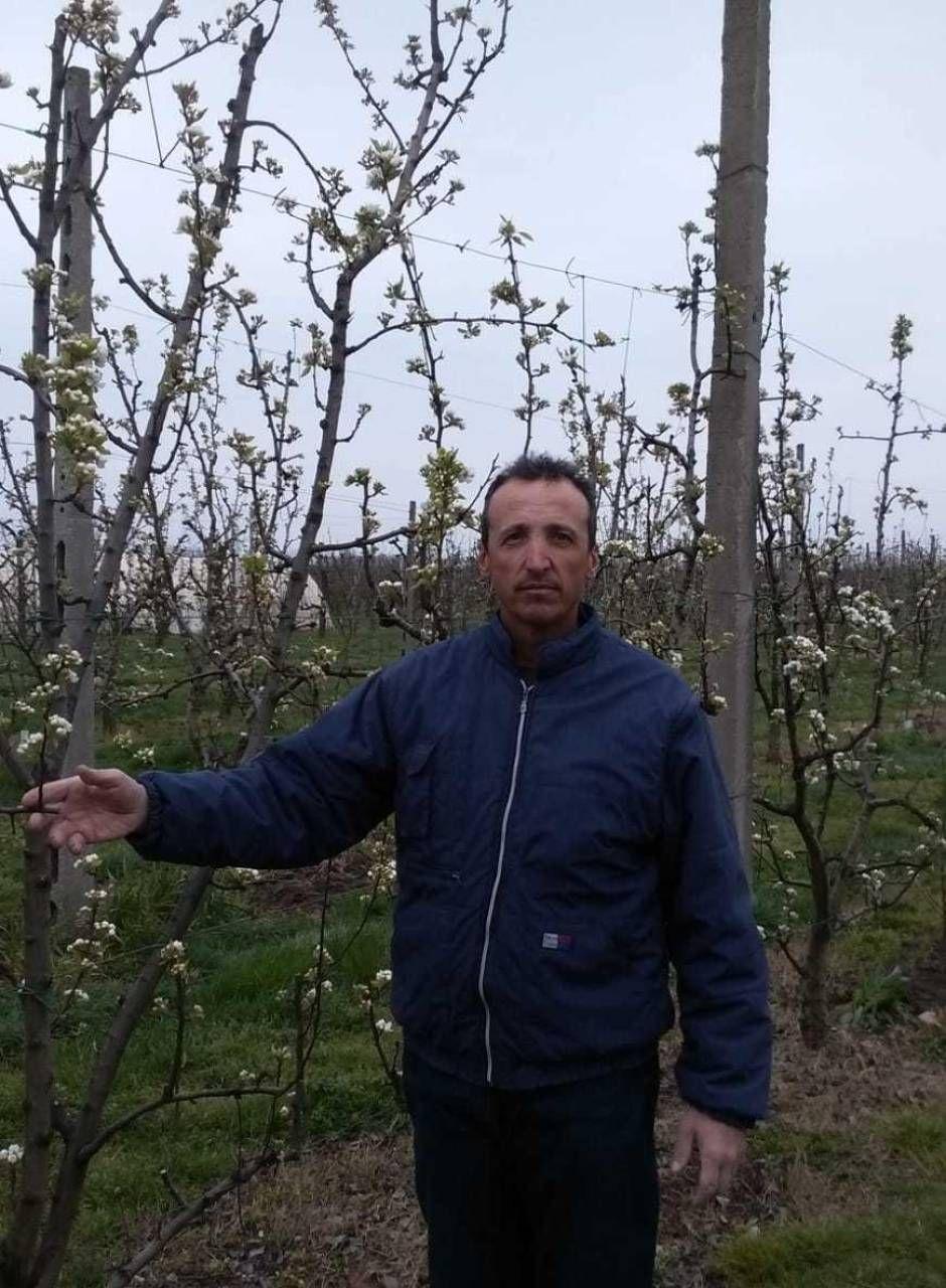 Massimo Silvestri nella sua azienda agricola a Sozzigalli di Soliera colpita come altre dalle gelate