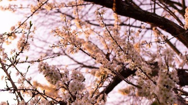 Previsioni meteo venerdì 3 aprile: riecco la primavera