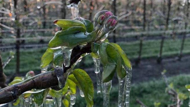 Maltempo e gelo in Emilia Romagna