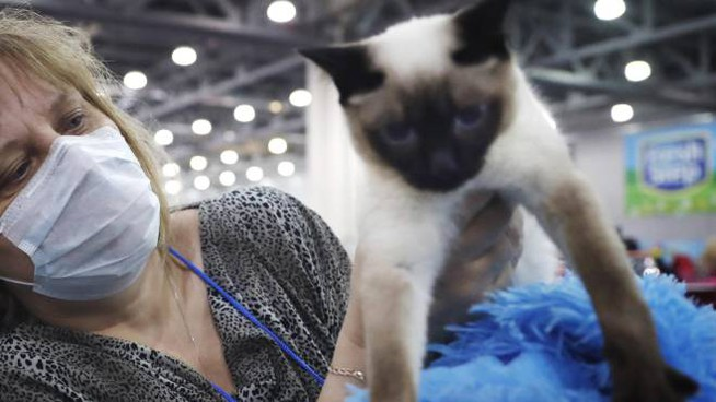 I gatti posso infettarsi con il Coronavirus (Ansa)