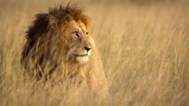 A caccia di elefanti e leoni in diretta streaming dalla savana