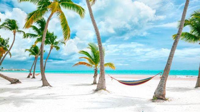 Le spiagge dei Caraibi sono fra gli sfondi più utilizzati su Zoom