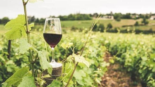 Quando è nato il vino