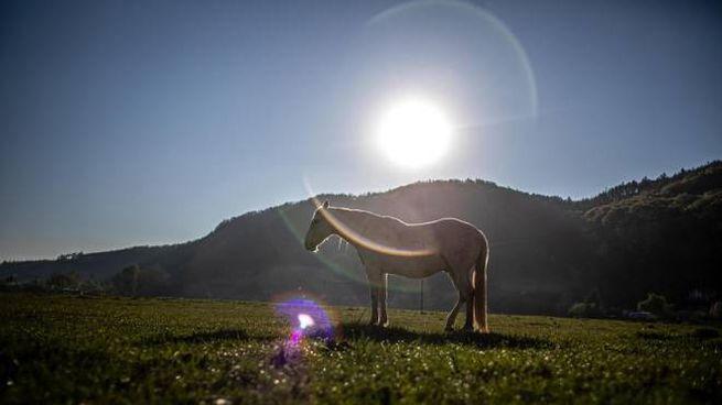 Un cavallo al sole (Ansa)