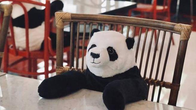I panda fanno compagnia ai clienti del ristorante - Foto: instagram/maison.saigon