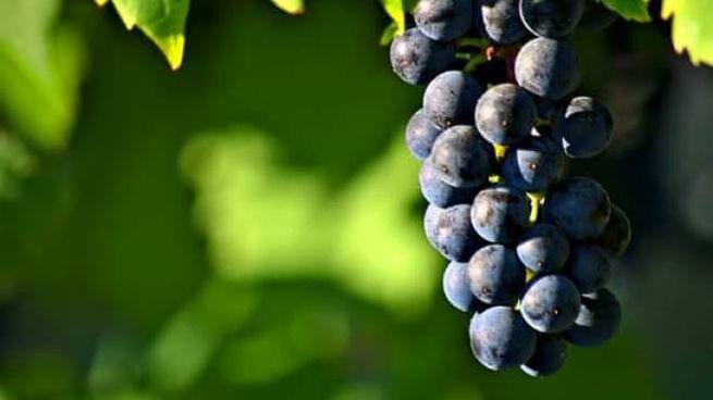 Vini siciliani, quali sono le principali caratteristiche