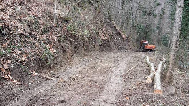 La strada costruita nel bosco dopo aver abbattuto degli alberi