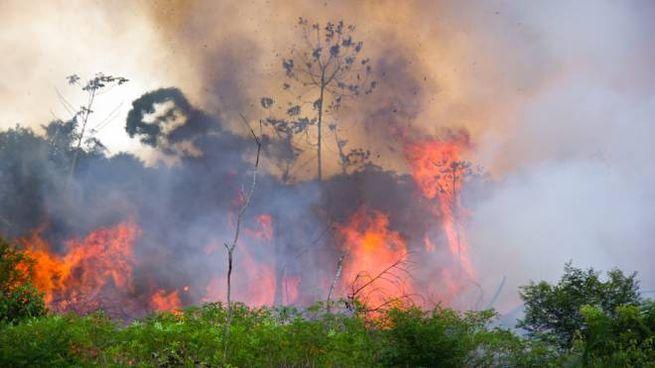 La foresta amazzonica, fra le aree più impoverite secondo lo studio Global Forest Watch