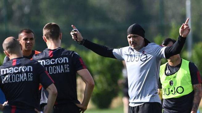 Bologna Fc, Mihajlovic e le punizioni perfette / VIDEO - Sport - Calcio -  ilrestodelcarlino.it