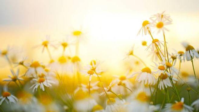 Il 20 giugno 2020 cade il solstizio d'estate