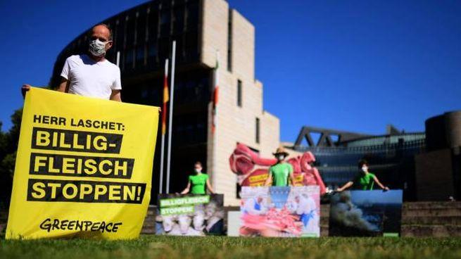 Attivisti Greanpeace protestano da Dusseldorf dopo i casi nei mattatoi (Ansa)