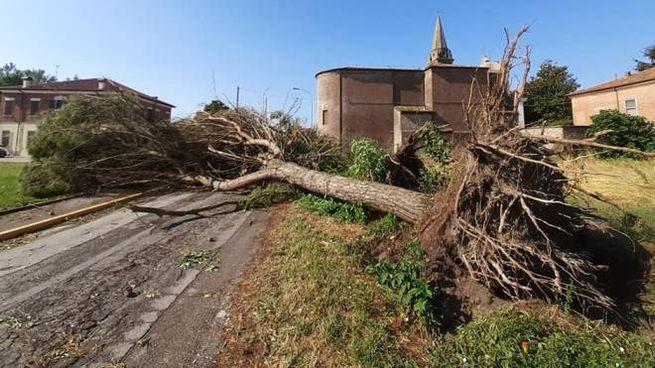 Maltempo, albero abbattuto sulla strada (Foto Anja Rossi)