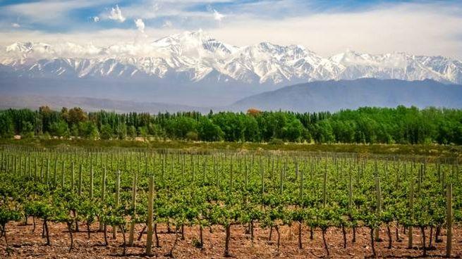 Le vigne argentine di Mendoza, con vista sulle Ande