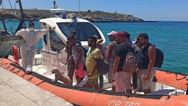 Lampedusa, tra i migranti anche un barboncino (Ansa)