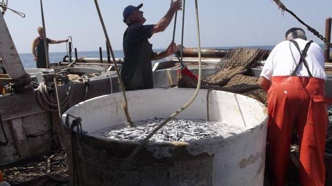 Stop alla pesca fino al 6 settembre per Marche e Romagna