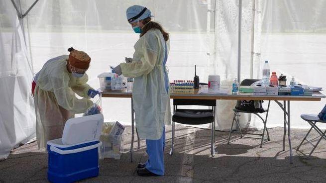 Covid, operatori sanitari alle prese con i campioni dei test sierologici (Ansa)