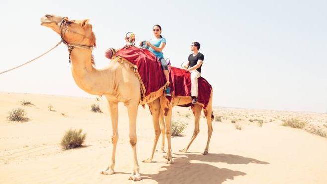 Un tour in cammello a Dubai è l'esperienza più apprezzata del mondo per Tripadvisor
