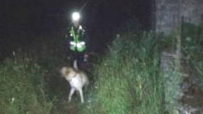 Scout disperso e ritrovato, il labrador Seiji in azione