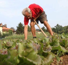 Seregno, over 60 e famiglie: ecco le nuove regole  per l'orto in città