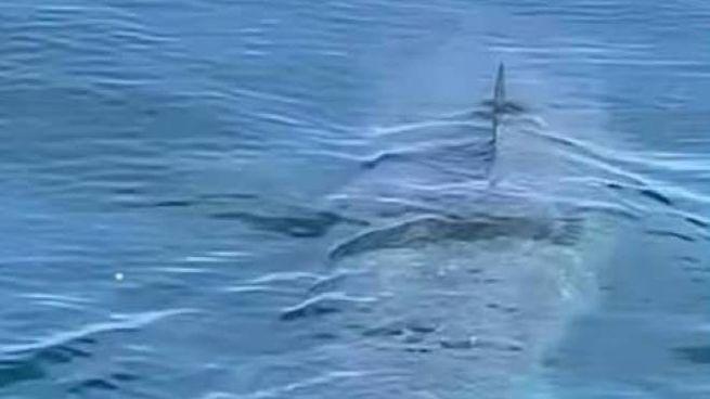 Lo squalo elefante avvistato stamattina