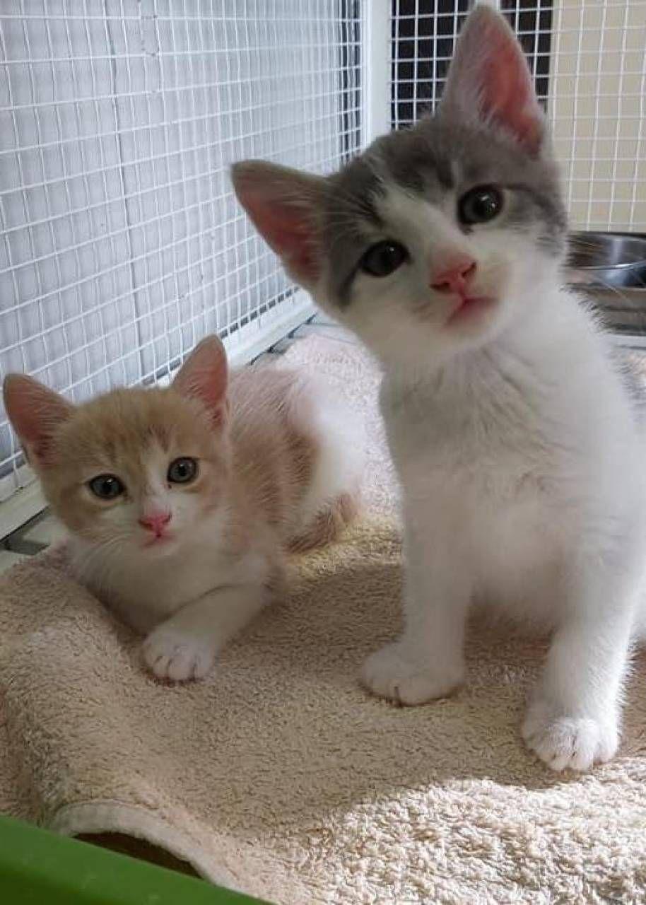 I gattini trovati a Bizzuno