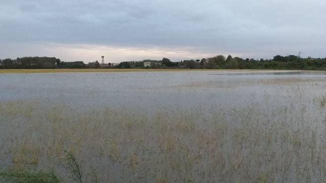 Esondazione del Sesia