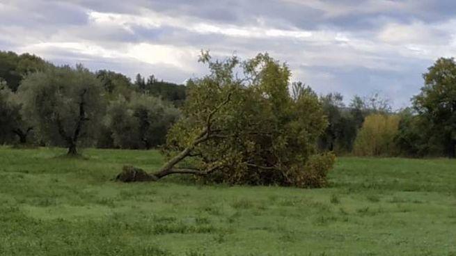 Uno degli alberi caduti