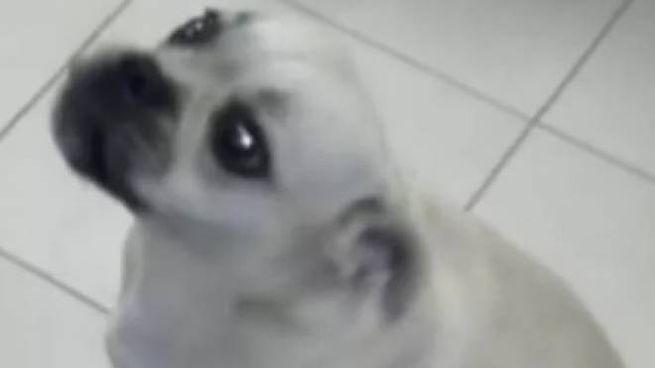 Il cane che ha viaggiato da Terni a Foligno