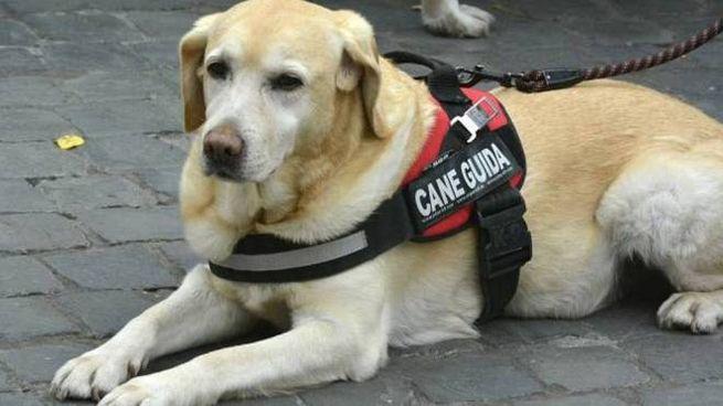 Il cane guida che ha salvato la sua padrona sbarrandole la strada