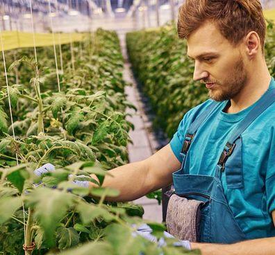 IGuessMed, la società che ricerca sistemi di irrigazione digitali