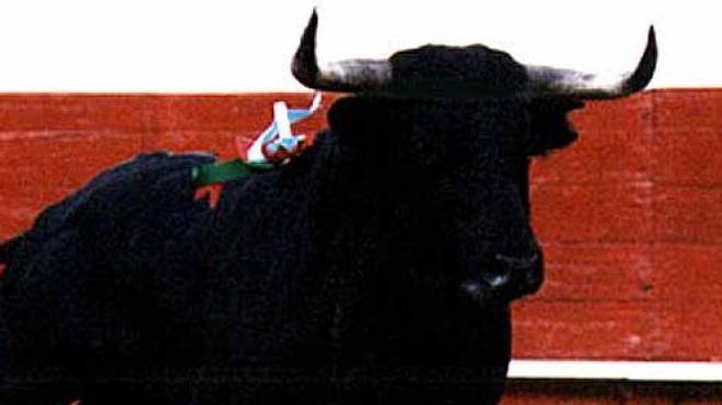 Toro scappato a Bazzano (foto d'archivio Businesspress)