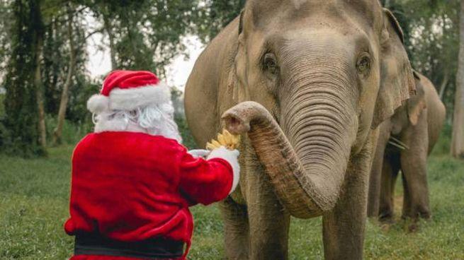 In videochat con l'elefante: un regalo di Natale originale - Foto: press anantara.com