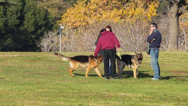 Cani e umani al parco in una foto L.Gallitto