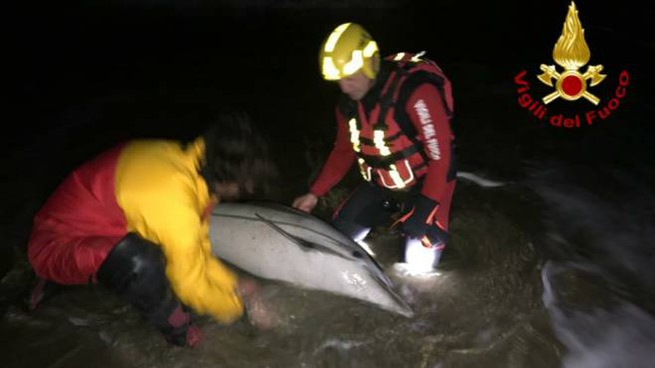Il delfino salvato