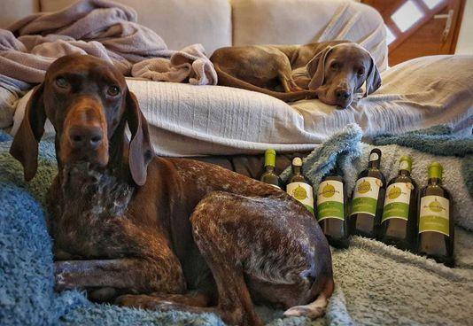 Si moltiplicano le. iniziative per. sostenere la campagna anti-abbandono dei cani