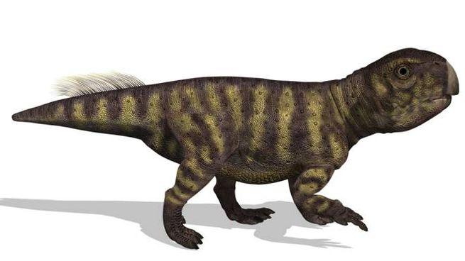 Una ricostruzione dello Psittacosaurus, il dinosauro di cui è stato studiato il sedere