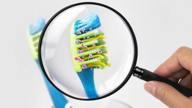 Ecco da dove arrivano i microorganismi che vivono negli spazzolini