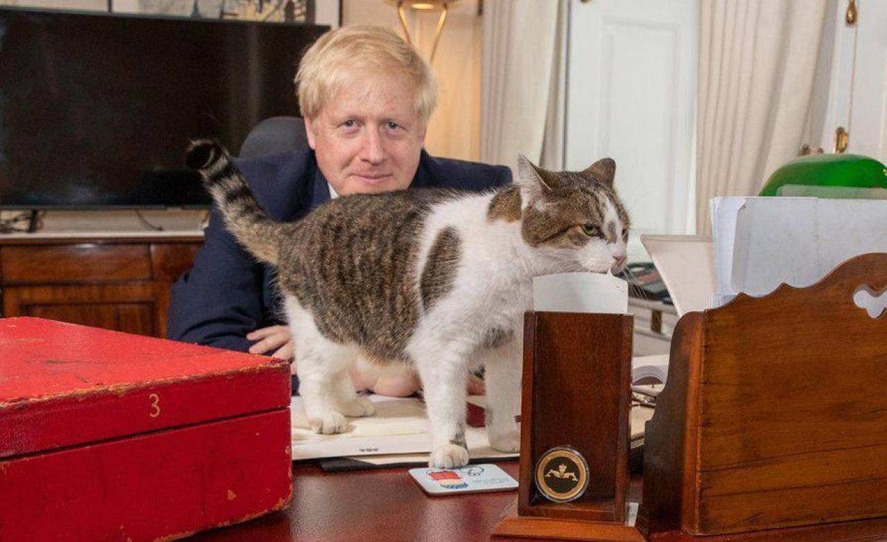 Dieci anni al potere Il gatto Larry fa festa - Cronaca - quotidiano.net