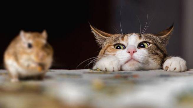 I consigli per placare l'istinto da cacciatori dei gatti domestici