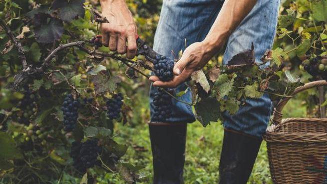 La critica enologica mostra grande apprezzamento per i vini bio