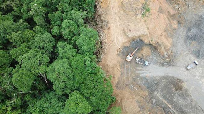 Dal 2002 abbiamo perso un'area di foreste grande quanto la Francia