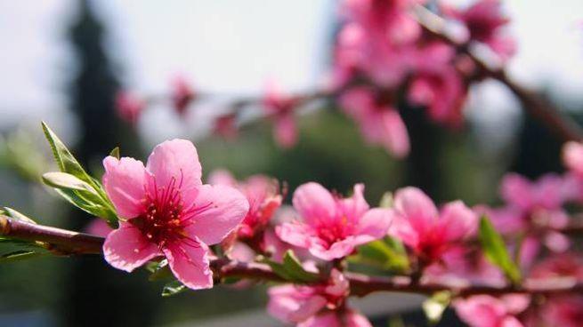 L'equinozio di marzo segna l'inizio della primavera astronomica