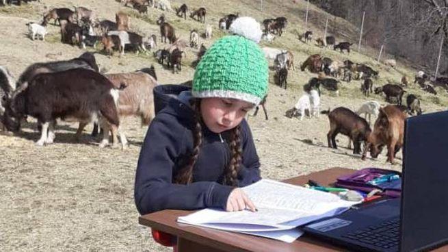 La bambina che fa la dad fra le caprette