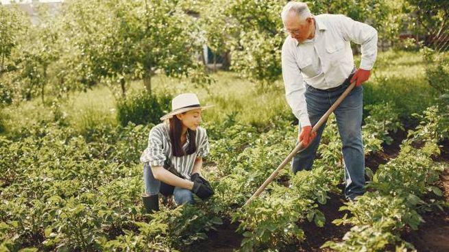 Prodotti essenziali giardinaggio