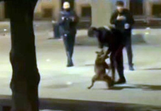 Un frame del video dove si vede il pitbull che aggredisce il carabiniere
