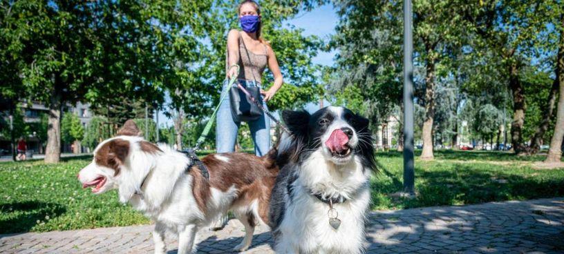 Recoaro Terme, il sindaco ha previsto. sanzioni fino a 500 euro per i padroni i cui cani. abbaino in modo prolungato e costante
