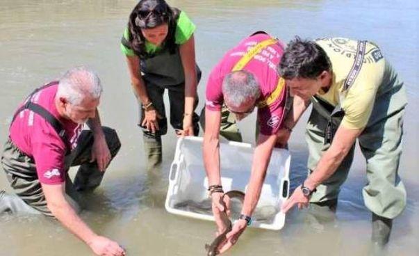 Si parlerà di anguille per il ciclo vitale legato alle migrazioni e alla riproduzione