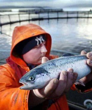 SalMar e Nts si sfidano per diventare i 're' degli allevamenti di salmone in Norvegia