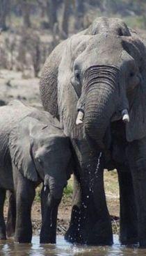In Kenya, secondo il primo report ufficiale, ci sono 36.280 elefanti
